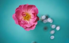 Картинка flowers, bokeh, petals