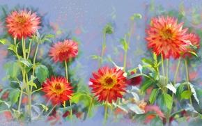 Картинка цветы, рисованные, георгины