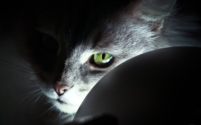 Обои light, cat, Cat, eye