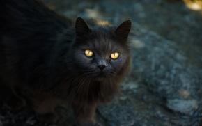 Картинка глаза, кот, прямой взгляд