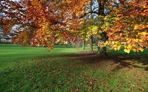 Картинка Осень, Парк, Fall, Листва, Park, Autumn, Leaves