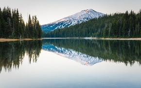 Картинка лес, деревья, природа, озеро, отражение, гора