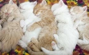 Обои нежность, животные, малыши, котята, спящие котята