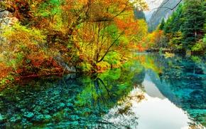 Картинка деревья, река, China, Китай, национальный парк Цзючжайгоу