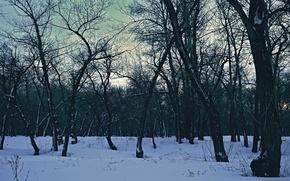 Картинка Солнце, Небо, Природа, Деревья, Лес, Пейзаж, Фильтры, Разно, На фон, Fores, Мрачность