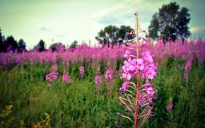Картинка поле, лето, цветы, день.