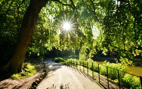 Обои деревья, листва, солнце, лучи, свет
