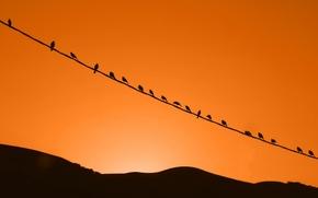 Обои птицы, небо, природа, закат