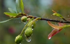 Обои капли, после, дождя, весна, листва, ветка, макро