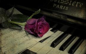 Картинка цветок, ноты, роза, пианино, винтаж