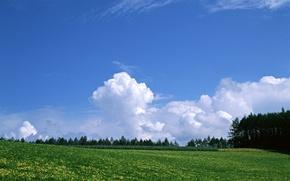 Картинка лес, небо, трава, облака