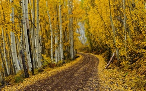 Картинка road, autumn, leaves, autumn colors, fall, foliage, fall colors, golden road