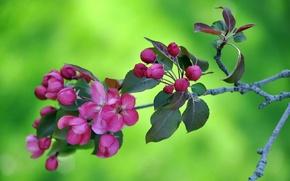 Обои листья, цветы, природа, ветка, весна, сад