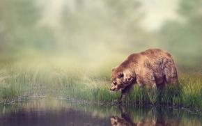 Обои лес, трава, вода, отражение, река, камыши, фон, берег, размытие, медведь, боке, бурый