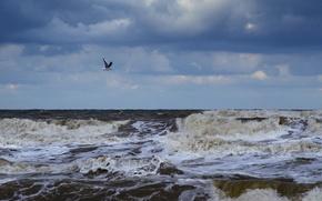 Обои море, волны, пена, тучи, чайка