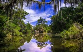 Картинка река, деревья, Луизиана, Баратария, Barataria, отражение, Louisiana