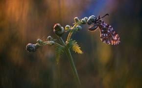 Картинка макро, фон, бабочка, насекомое, папоротник, обои от lolita777