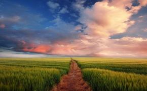 Картинка дорога, поле, небо, облака, горизонт, колосья