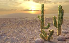 Обои закат, камни, желтый, солнце, кактусы, оранжевый, колючки, пустыня