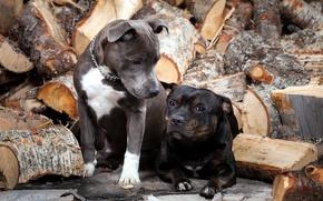 Картинка собаки, дрова, друзья