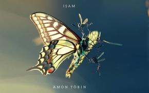 Обои насекомые, борьба, amon tobin, мотылек