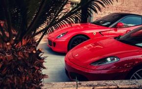 Картинка красный, F430, Ferrari, red, феррари, 599, GTO, palm