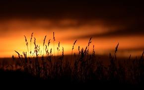 Картинка небо, закат, природа, фон, widescreen, обои, растительность, темно, растение, силуэт, wallpaper, широкоформатные, background, полноэкранные, HD …