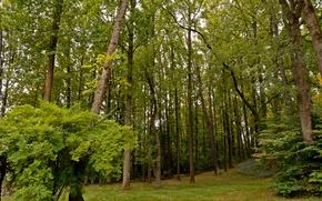 Обои деревья, кусты, зелень, лес