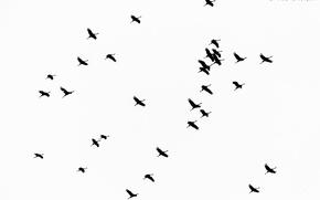 Обои полёт, небо, птицы