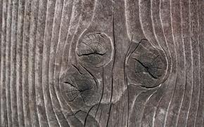 Обои дерево, сучки, текстура