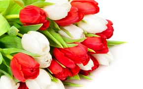 Обои белые, тюльпаны, красные