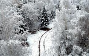 Картинка зима, дорога, снег, деревья, road, trees, nature, snow, winer
