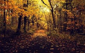 Картинка дорога, осень, асфальт, листья, деревья, ветки, природа, парк, желтые