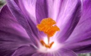 Картинка цветок, макро, лепестки, 150