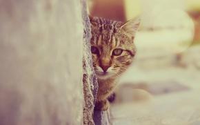 Обои взгляд, Кошка, котя, стена, зрачки