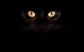 Картинка Взгляд, Кошка, Усы, Кот, Глаза, Чёрный