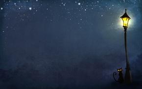 Обои фонарь, ночь, кошки