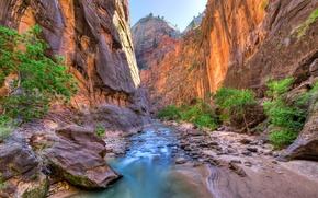 Обои zion national park, сша, юта, скалы, каньон