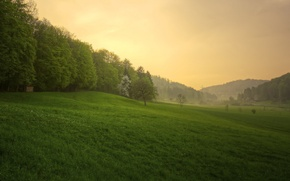 Картинка лес, трава, закат, природа, весна, после дождя
