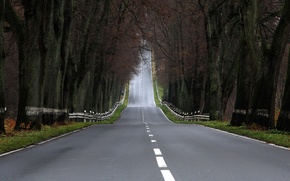 Картинка дорога, деревья, пейзажи, дороги, фотографии, леса