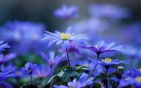 Картинка лето, цветы, природа, красота