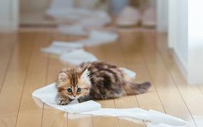Обои кошка, пол, Daisy, бумага, котенок, туалетная, доски, Ben Torode
