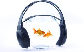Картинка вода, рыбки, музыка, аквариум, наушники, золотые