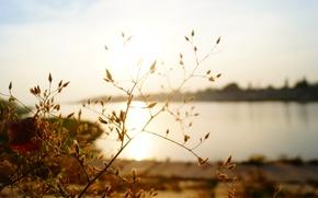 Картинка песок, пляж, трава, вода, солнце, макро, природа, роса, река, настроение, красота, вечер, Берег, дикий мир, …