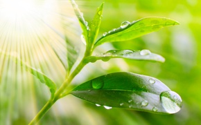 Обои макро, природа, капельки, роса, утро, листик, nature, солнечные лучи, macro, the dew drops of the ...