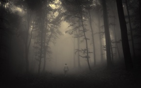 Картинка дорога, грусть, лес, деревья, пейзаж, природа, forest, misty, road, trees, landscape, nature, sadness, жуткий, creepy, …