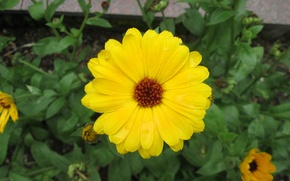 Картинка flower, yellow, sun, new, cute, sunflower