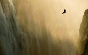 Картинка водопад, горы, орел