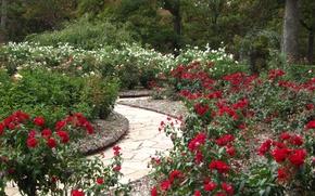 Картинка цветы, парк, сад, nature, Park, flowers, garden, path