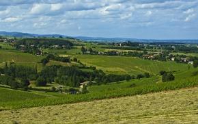 Картинка природа, Поле, виноградник, field, nature, vineyard